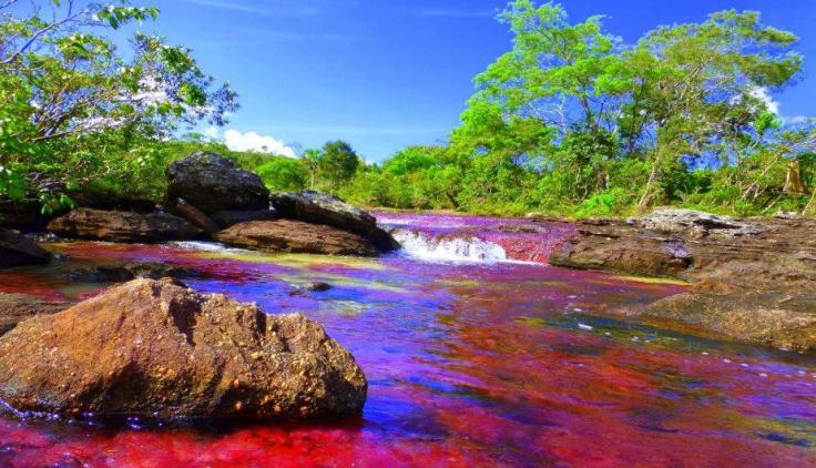 rio-cano-cristales